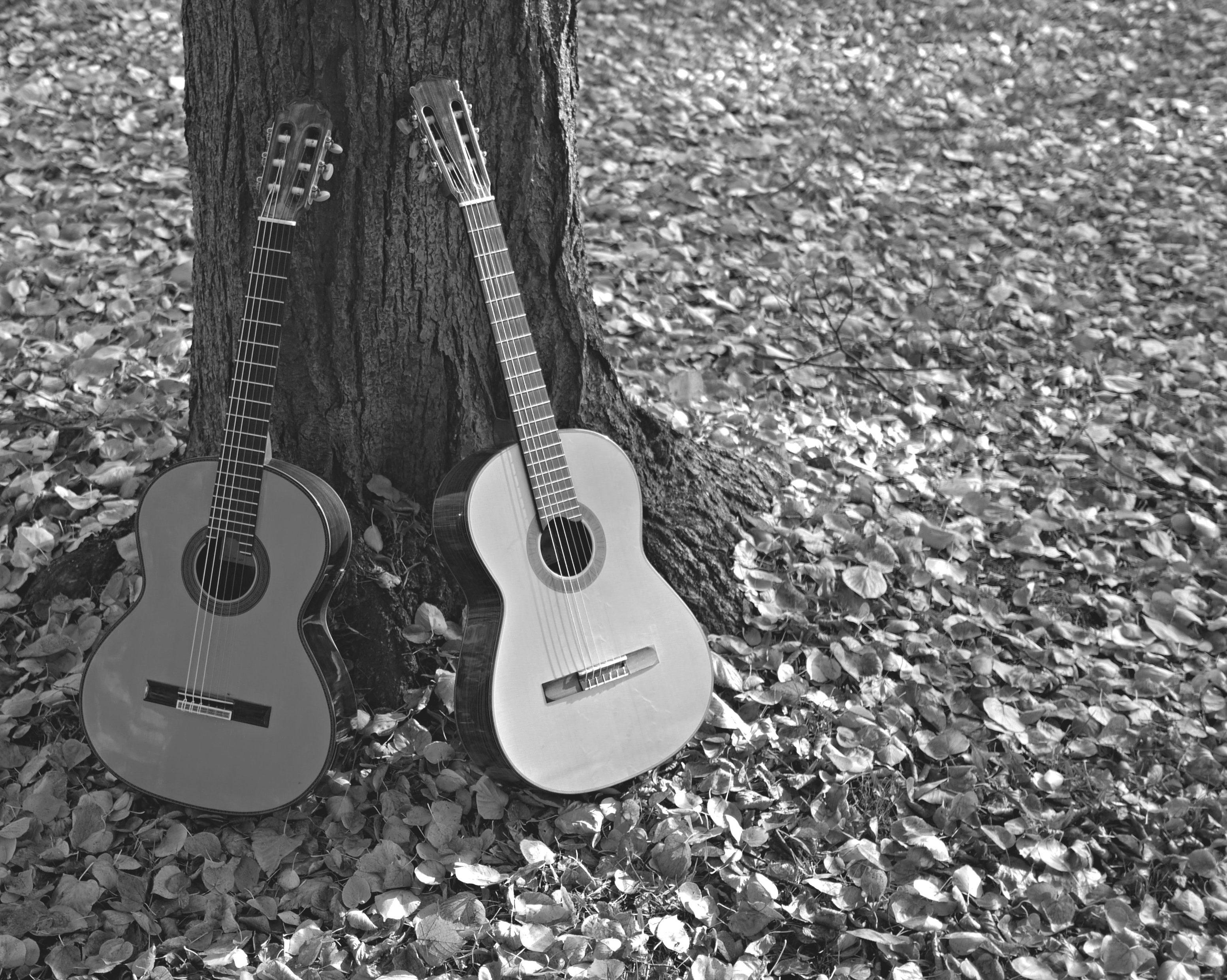 Gitarrenmusik  für Trauerfeiern in und um  Berlin - Gitarren im Herbst